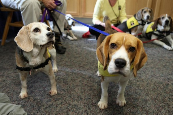 Casey and Denver greet visitors -- and the camera -- at Pet Therapy Awareness Day at Penn State Hershey Medical Center. https://www.flickr.com/photos/pennstatelive/6215052235