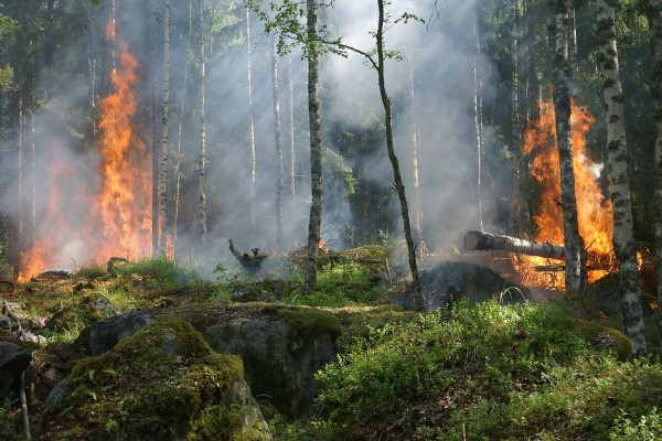forest-fire-432870_960_720